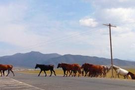 horses on road kyrgyzstan