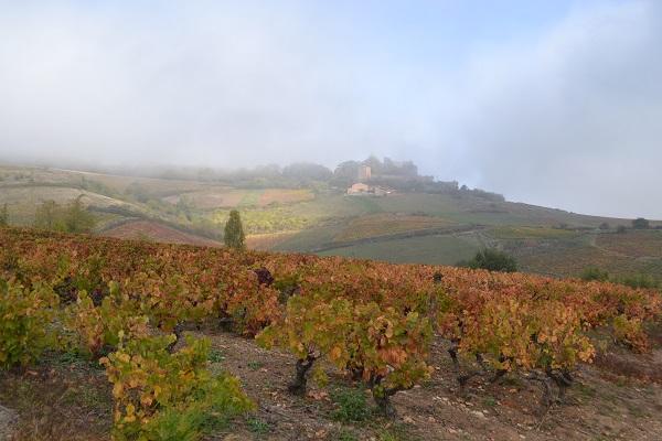 Autumn in Beaujolais
