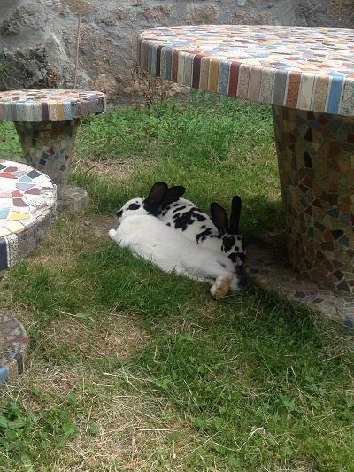 Rabbits at home