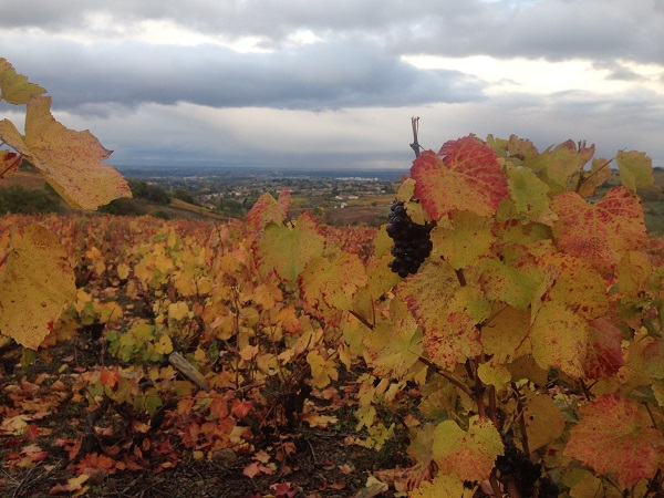 Autumn in France vineyards