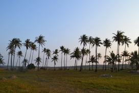 Tofo BEach Mozambique Palms
