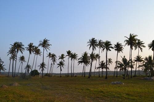 Tofo BEach Mozambique Palms