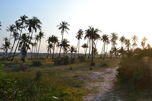 Tofo Beach Palm Trees
