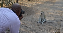 Monkey Victoria Falls