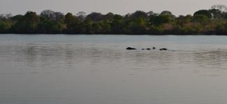 kafuenationalparkzambiaHippos