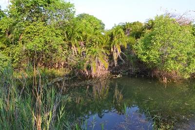 Zambia lagoon Kafue