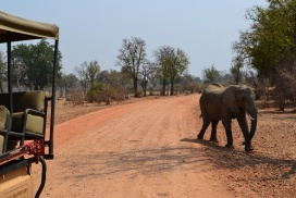 South Luangwa National Park Zambia1