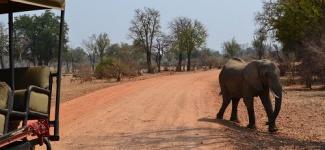 South Luangwa National Park Zambia1