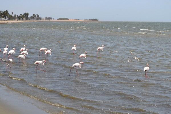flamingos in walvis bay namibia1