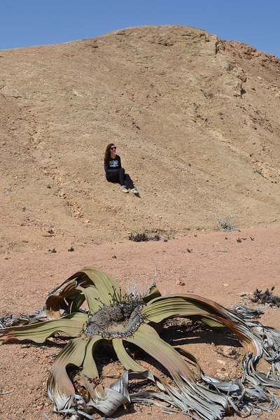 welwitschia plants outside of swakopmund3